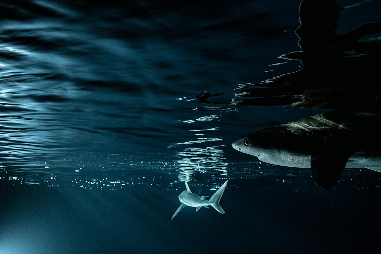 Adélie Mer 01 © Laurent Ballesta