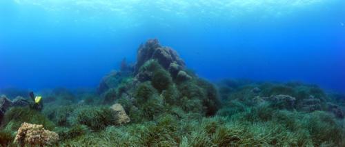 Panorama herbier autour d'un roche aplati niveaux